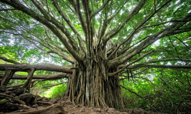 The Nature of Marketing: Its As Complex as A Gigantic Tree with Branches